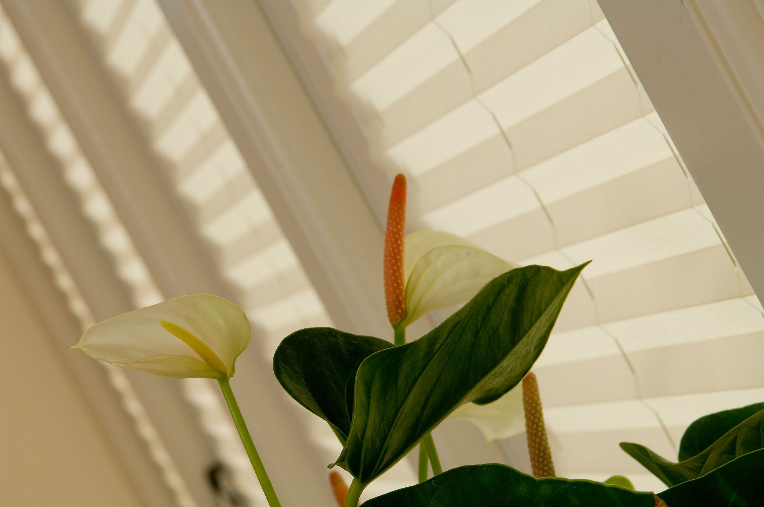 conservatory blinds pleated